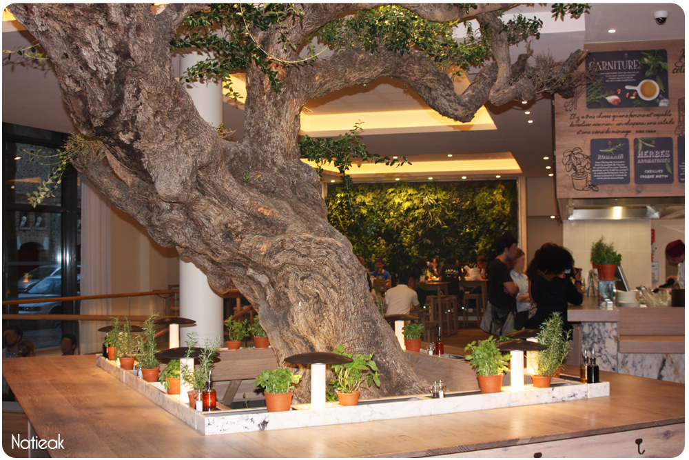 olivier multi-centenaire du restaurant Vapiano de Bercy Village