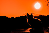 A cat and landscape silhouetted against a bright setting sun.