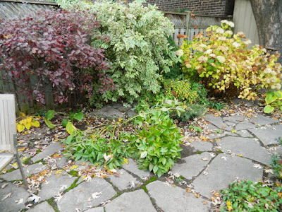 Leslieville Toronto Backyard Garden Fall Clean up before by Paul Jung Gardening Services
