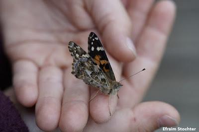 Ong, conservação ambiental, ongs estimulam a criação de políticas públicas de conservação ambiental, conservação ambiental, fundação boticário de proteção a natureza, fundação boticário, natureza, conservação de espécies ameaçadas de extinção, projetos sociais, extinção, animais, serviços ambientais