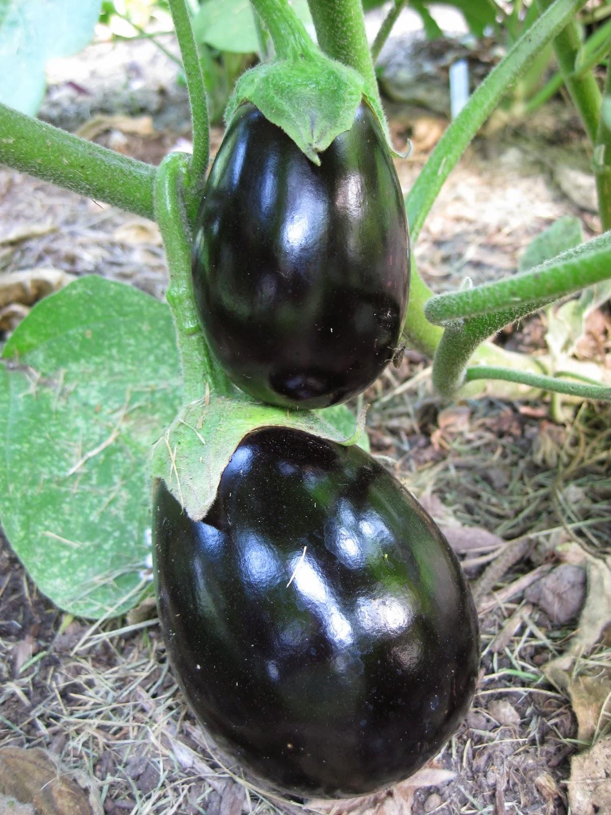 Botanical Fruits Examples