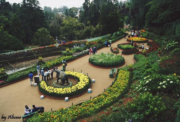 Ooty-gradina-botanica-impresii