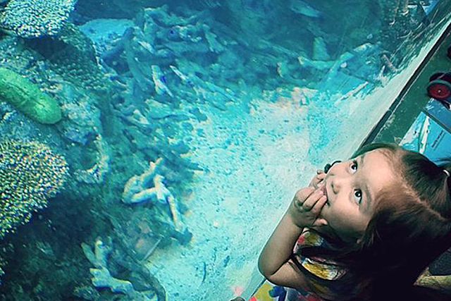 Best Aquariums in the USA: Aquarium of the Pacific: