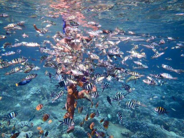 Snorkeling at Nusa Penida Island