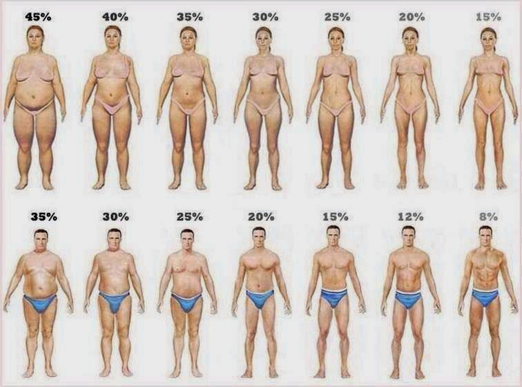 grasso corporeo per maschio e femmina
