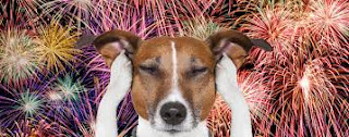 https://positively.com/contributors/10-safety-and-calming-tips-for-dogs-during-fireworks/