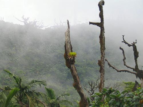 Paysage Saba