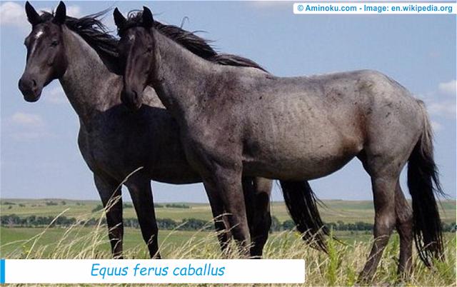 Fakta unik tentang kuda