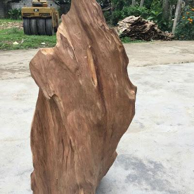 Gỗ ngọc am là gỗ gì? Gỗ ngọc am có tác dụng gì?