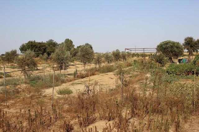 Horta seca devido à poluição