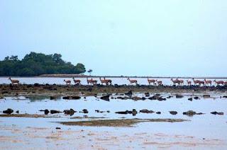 Taman Nasional Baluran di Situbondo