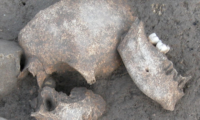 New research shows Gauls embalmed the severed heads of their enemies