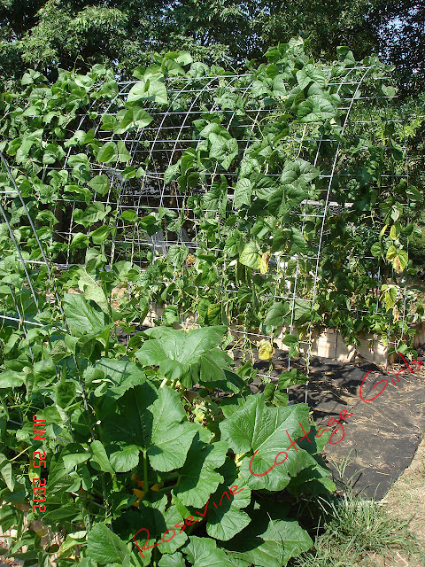 Raised bed garden, raised bed gardening, growing beans in raised beds, growing squash in raised beds, easy raised beds, raised bed garden soil