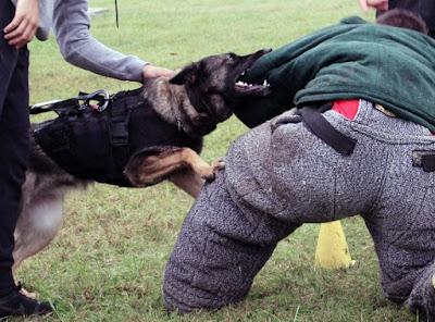Dog Aggressive Training