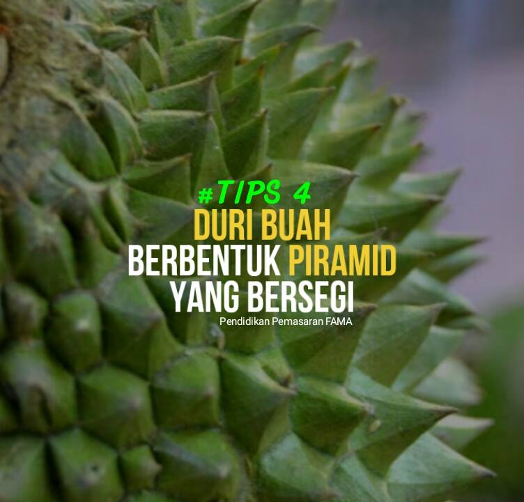 Tips 4 Mengenal Durian Musang King
