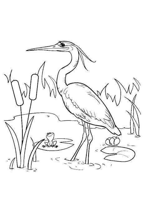 Mewarnai Gambar Burung Bangau - 2
