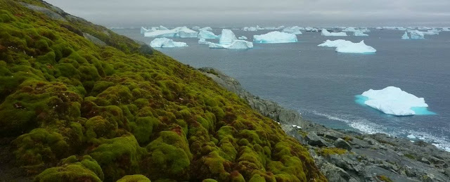 Antarctica Is Melting In Alarming Rate And Starting To Turn Green
