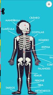 El cuerpo humano app tinybop huesos músculos