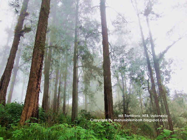 Pendakian Gunung Tambora via Desa Pancasila