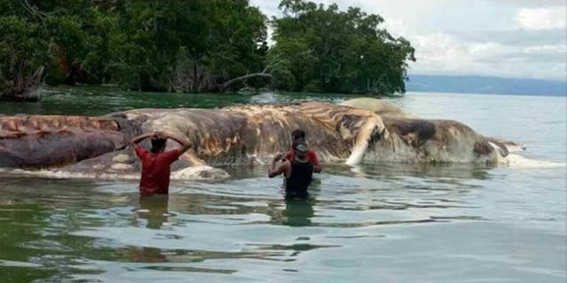 Gempar!! Ditemukan Bangkai Makhluk Raksasa di Pulau Seram, Belum Diketahui Jenis Makhluk Itu..