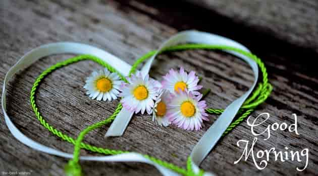 good morning with daisy heart romance valentines day