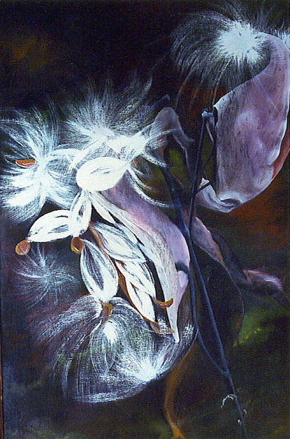 ~ Milk Weed Pod ~  Oil on canvas 24 x 48, 1980  Collector not recorded. Timeless Expression by Maguire