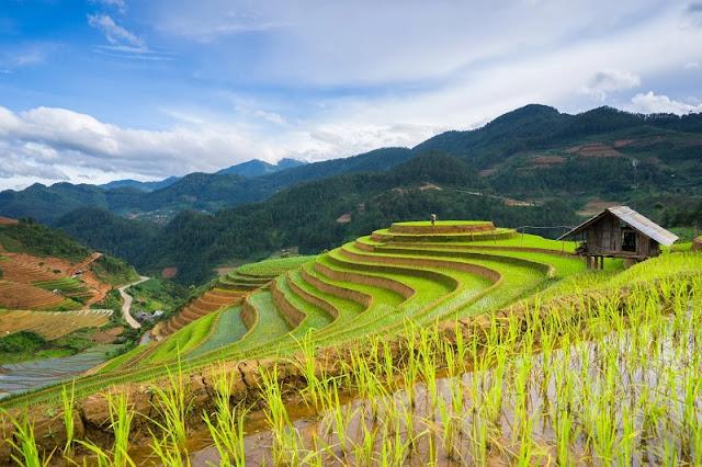 Mu Cang Chai Trekking Tours 1