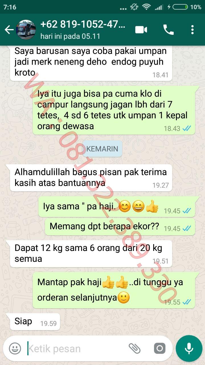 Toko Umpan Master Essen 100 Asli Original Essen Katilayu Ikan Mas Kilo Gebrus