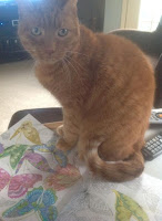 photo of Rusty the cat by Judi Madigan