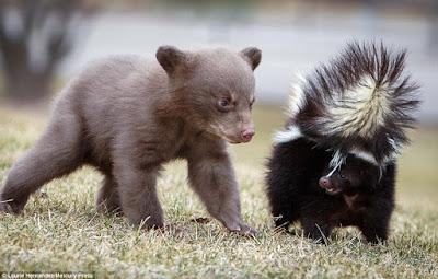 Skunks - stworzenie o ileż szlachetniejsze od Naszych Umiłowanych