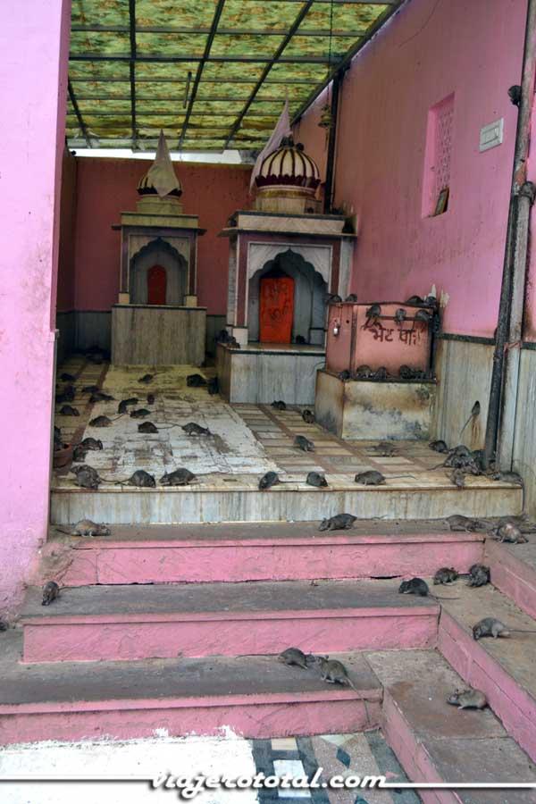 Karni Mata - Templo de las Ratas - Deshnok - Bikaner - India