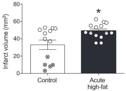 図:短期脂肪食で脳梗塞が拡大