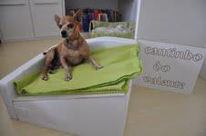 cama inclinada cães