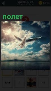 Над тихой и спокойной водной гладью осуществляет свой поле чайка, высматривая пищу себе