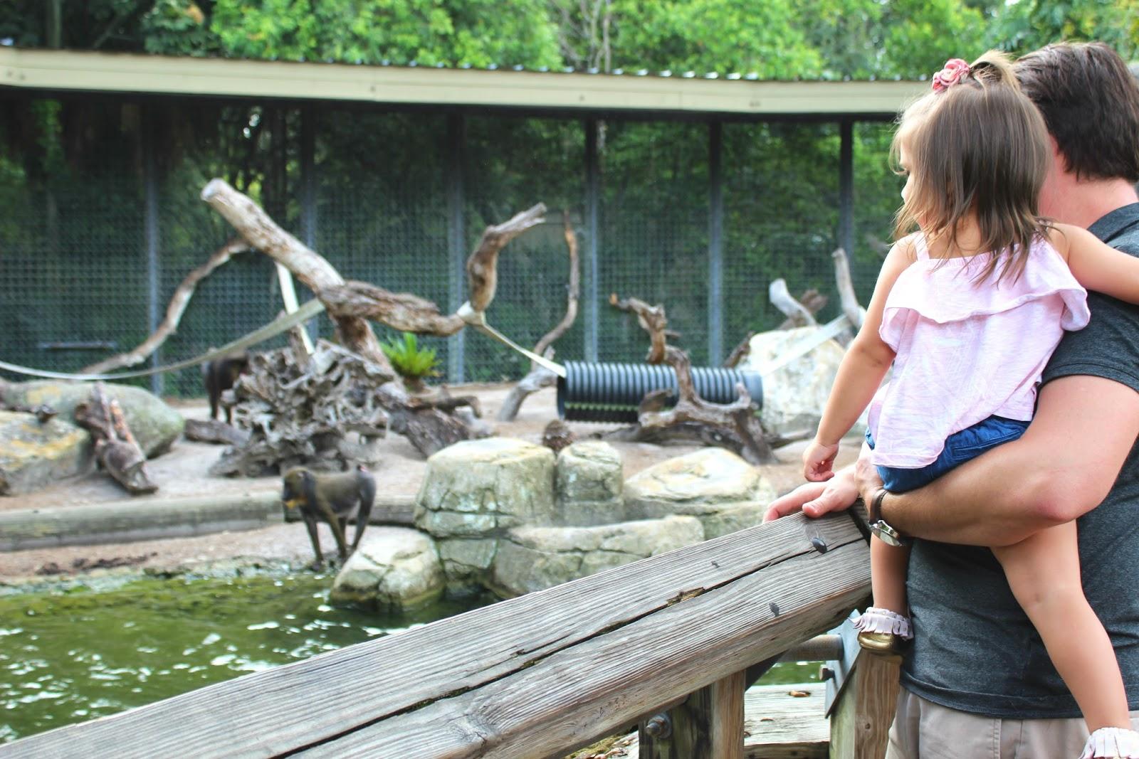 The Littlest Funk Blog Lowry Park Zoo Making Memories