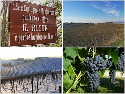 ruché vino uva