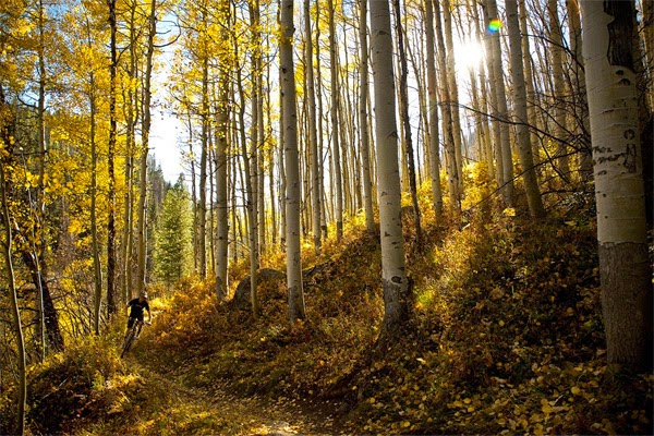 Peak Season, Colorado Fall feat Yeti Cycles