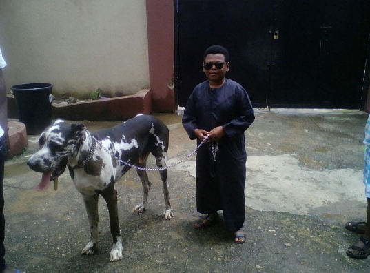 osita iheme dog