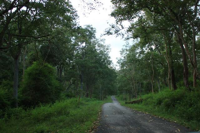 The road from K.Gudi to BR temple, BRT tiger reserve, Karnataka