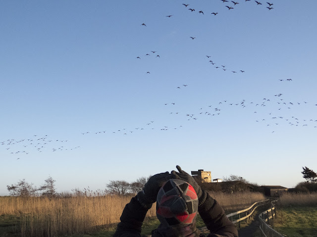 birdwatching in Ireland in winter at the Wexford Wildfowl Reserve