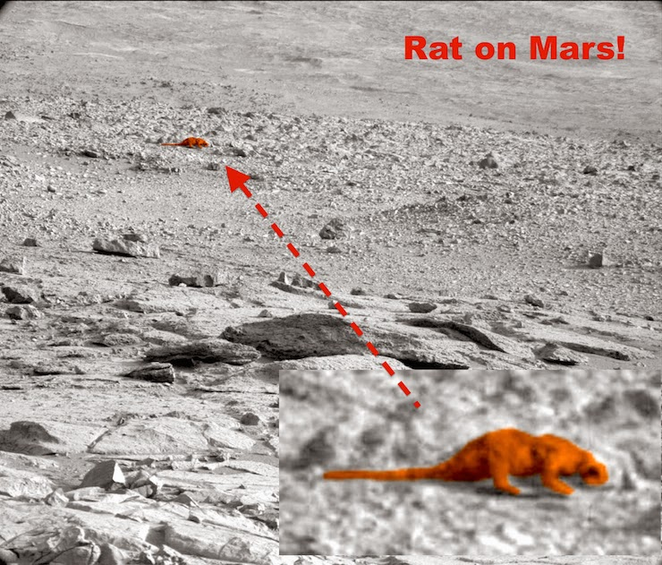 UFO SIGHTINGS DAILY: Rat On Mars In NASA Photo By ...