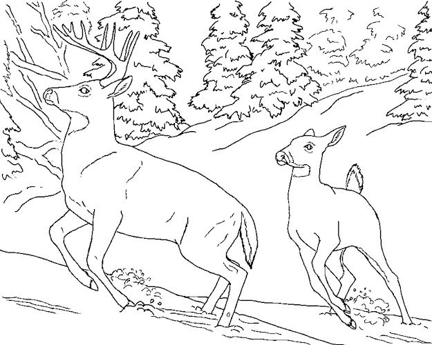 Coloring Pages Of Nature And Animals Awesome Nature Scene Coloring  Sheets At Nature Coloring Pages With
