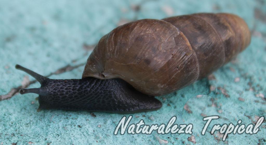 Naturaleza tropical controla los moluscos de tu jard n for Caracoles de jardin como eliminarlos