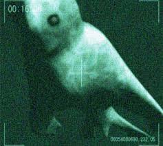 Τα απόκοσμα πλάσματα στην ''άβυσσο'' της λίμνης Βαικάλης και τα ανεξήγητα φαινόμενα