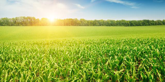 Tarım Ülkesi Türkiye, Hangi Tarım Ürünlerini Hangi Ülkelerden Alıyor?