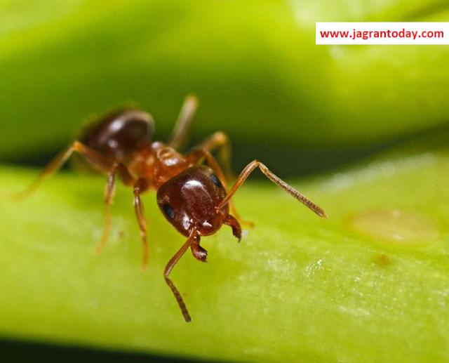 चींटियाँ भी बनती है शौचालय