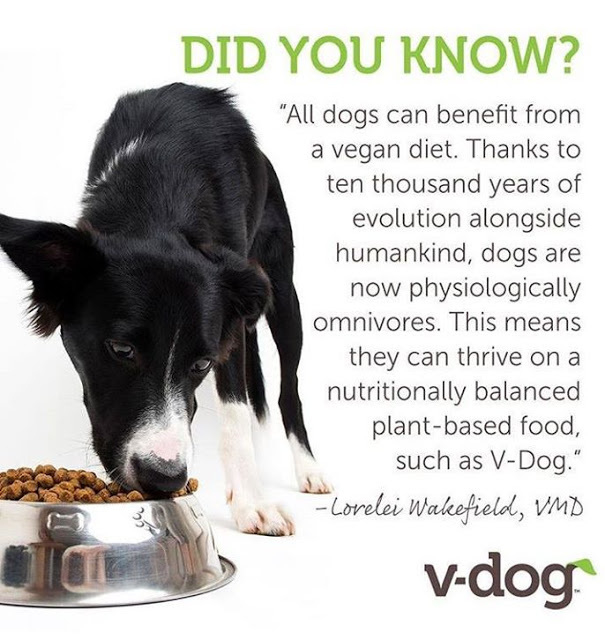 Can I Feed My Dog A Vegan Diet