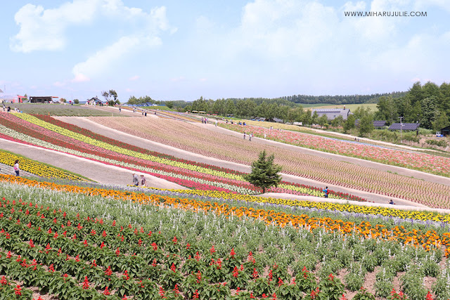 Panoramic flower gardens shikisai no oka