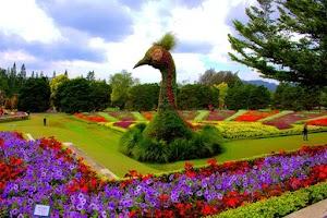 Flowers Park : Taman Bunga Nusantara, Solusi Liburan Keluarga dan Taman Paling Romantis di Cianjur