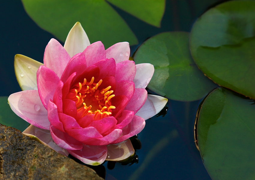 Dougs Photo Blog The Lotus Eaters